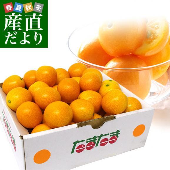 宮崎県から産地直送 JA宮崎中央 たまたま 2Lサイズ 1キロ (約40玉) 送料無料 きんかん 金柑 完熟きんかん01