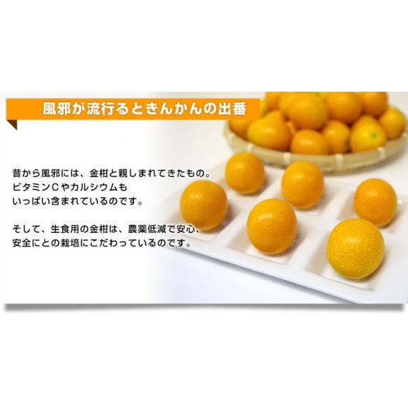 宮崎県から産地直送 JA宮崎中央 たまたま 2Lサイズ 1キロ (約40玉) 送料無料 きんかん 金柑 完熟きんかん06