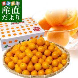 宮崎県から産地直送 JA宮崎中央 たまたま 2Lサイズ 3キロ (約120玉) 送料無料 きんかん 金柑 完熟きんかん
