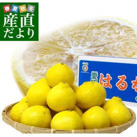 愛媛県より産地直送 JAにしうわ はるか LからMサイズ 5キロ (30から34玉) 送料無料 柑橘 オレンジ ハルカ 西宇和 八幡浜