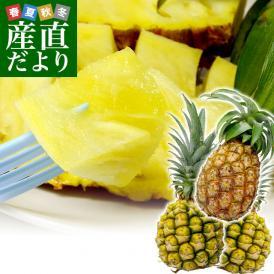 沖縄パインアップル!希少な国産パインをセットでお届けします!