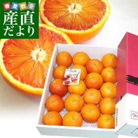 送料無料 愛媛県より産地直送 JAえひめ南 ブラッドオレンジ 秀品 4Lから2Lサイズ 3キロ(18から20玉前後) 柑橘 おれんじ