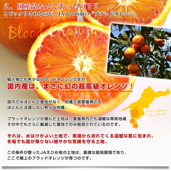 愛媛県より産地直送 JAえひめ南 ブラッドオレンジ ( 選べる品種:モロ種・タロッコ種) 秀品 3キロ (18玉から20玉前後) 柑橘 国産オレンジ 国産ブラッド 送料無料05