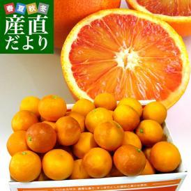 送料無料 愛媛県より産地直送 JAえひめ南 ブラッドオレンジ 優品 LからMサイズ 5キロ(30から35玉前後) 柑橘 おれんじ