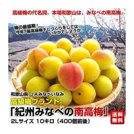 和歌山県 JAみなべいなみ 高級梅ブランド 紀州みなべの南高梅。 2L10キロ(400玉前後)