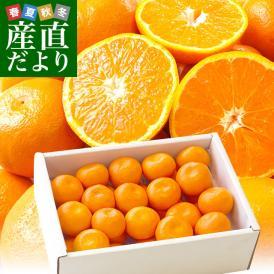 送料無料 佐賀県より産地直送 JAからつ ハウスみかん 3Sサイズ  約1.2キロ(約30玉) 蜜柑 ミカン