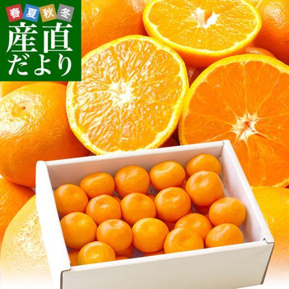 佐賀県より産地直送 JAからつ ハウスみかん 3Sサイズ  約1.2キロ(約30玉) 蜜柑 ミカン 送料無料 01