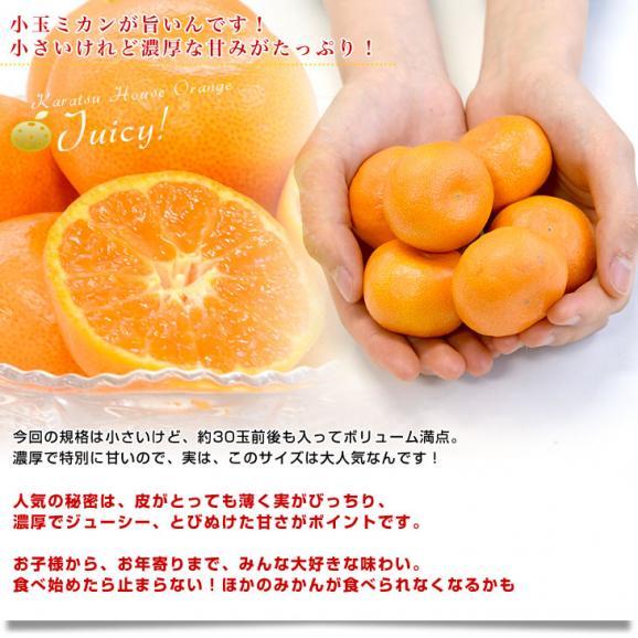 佐賀県より産地直送 JAからつ ハウスみかん 3Sサイズ  約1.2キロ(約30玉) 蜜柑 ミカン 送料無料 04