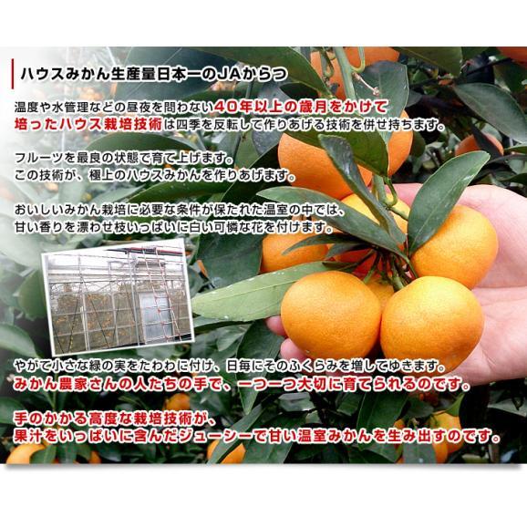 佐賀県より産地直送 JAからつ ハウスみかん 3Sサイズ  約1.2キロ(約30玉) 蜜柑 ミカン 送料無料 06