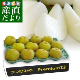 送料無料 栃木県より産地直送 JAうつのみやの梨 糖度13度以上の特秀 プレミアム13 約5キロ (9玉から16玉) なし ナシ