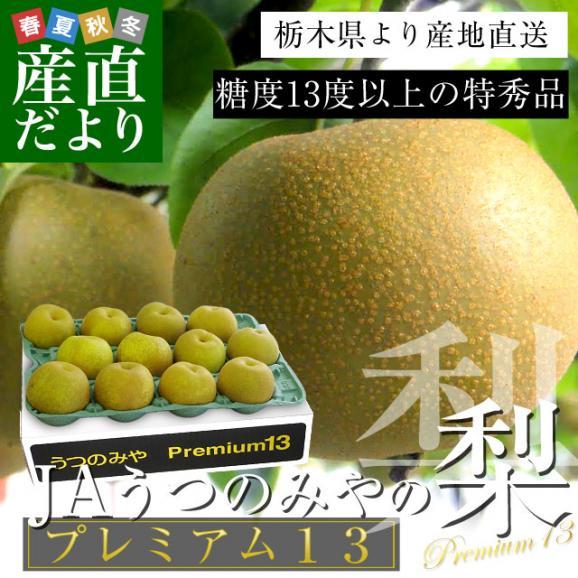 送料無料 栃木県より産地直送 JAうつのみやの梨 糖度13度以上の特秀 プレミアム13 約5キロ (9玉から16玉) なし ナシ02