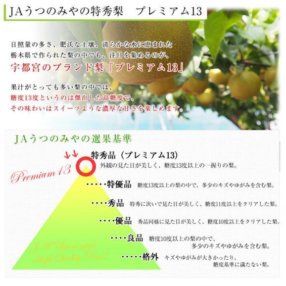送料無料 栃木県より産地直送 JAうつのみやの梨 糖度13度以上の特秀 プレミアム13 約5キロ (9玉から16玉) なし ナシ04