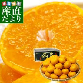 愛媛県より産地直送 JAにしうわ 日の丸みかん 千両 2Lサイズ 約5キロ(35玉前後) 蜜柑 ミカン 送料無料