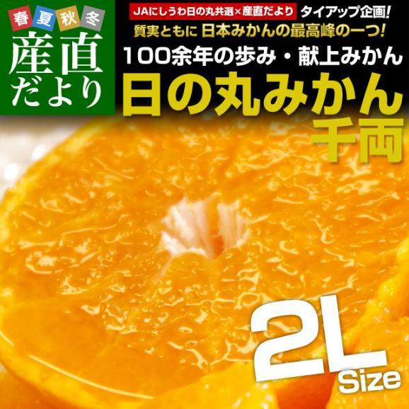 送料無料 愛媛県より産地直送 JAにしうわ 日の丸みかん 千両 2Lサイズ 約5キロ(35玉前後) 蜜柑 ミカン02