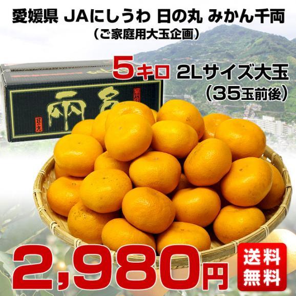 送料無料 愛媛県より産地直送 JAにしうわ 日の丸みかん 千両 2Lサイズ 約5キロ(35玉前後) 蜜柑 ミカン03