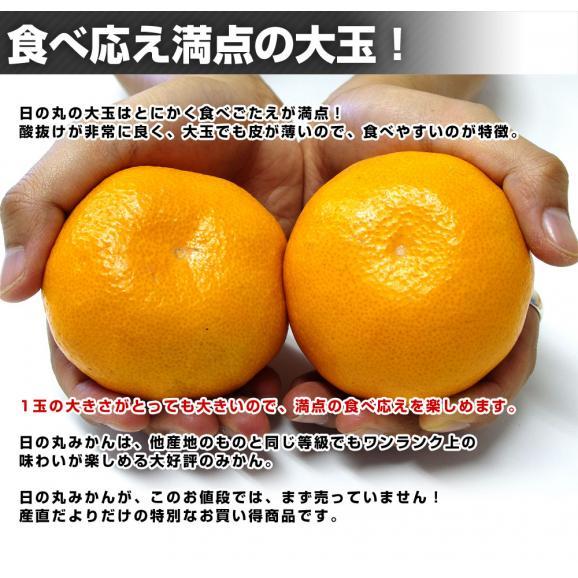 送料無料 愛媛県より産地直送 JAにしうわ 日の丸みかん 千両 2Lサイズ 約5キロ(35玉前後) 蜜柑 ミカン04
