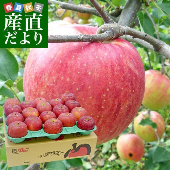 送料無料 長野県より産地直送 JAながの 飯綱地区 サンふじりんご 赤秀以上 5キロ (14玉から18玉)  林檎 りんご リンゴ01
