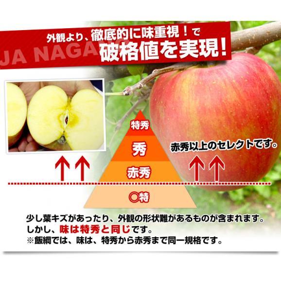 送料無料 長野県より産地直送 JAながの 飯綱地区 サンふじりんご 赤秀以上 5キロ (14玉から18玉)  林檎 りんご リンゴ04