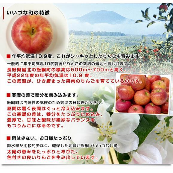 送料無料 長野県より産地直送 JAながの 飯綱地区 サンふじりんご 赤秀以上 5キロ (14玉から18玉)  林檎 りんご リンゴ06