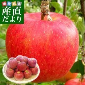 長野県より産地直送 JAながの 飯綱(いいづな)地区 シナノスイート 特秀品 5キロ(14玉から20玉) 送料無料リンゴ 林檎