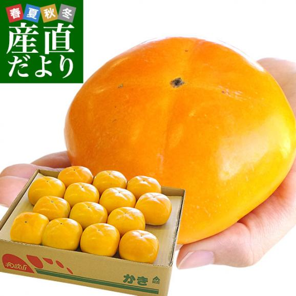 和歌山県より産地直送 JA紀の里 たねなし柿 大玉3Lサイズ 3.75キロ(14玉入) カキ かき 柿 送料無料01