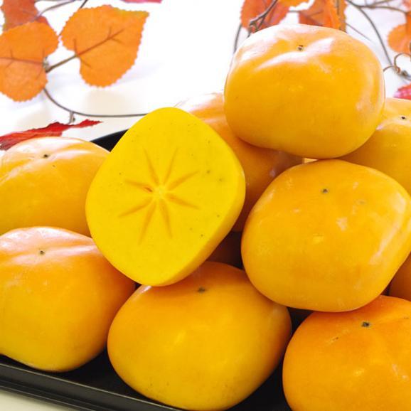 和歌山県より産地直送 JA紀の里 たねなし柿 大玉3Lサイズ 3.75キロ(14玉入) カキ かき 柿 送料無料04
