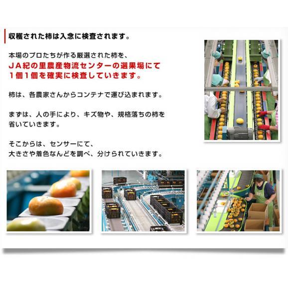 和歌山県より産地直送 JA紀の里 たねなし柿 大玉3Lサイズ 3.75キロ(14玉入) カキ かき 柿 送料無料06