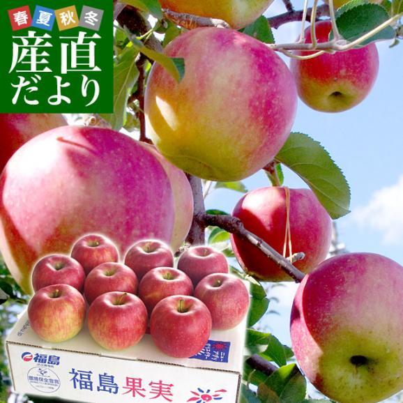福島県より産地直送 JAふくしま未来「陽光」秀品 2.5キロ(7玉から10玉) りんご 林檎 リンゴ 送料無料01