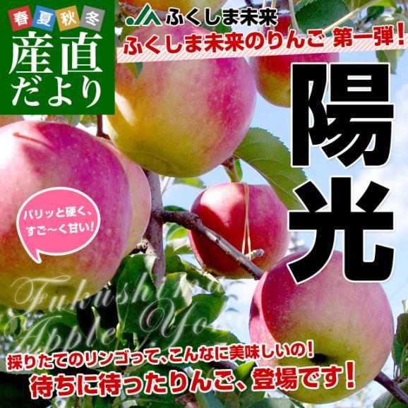 福島県より産地直送 JAふくしま未来「陽光」秀品 2.5キロ(7玉から10玉) りんご 林檎 リンゴ 送料無料02
