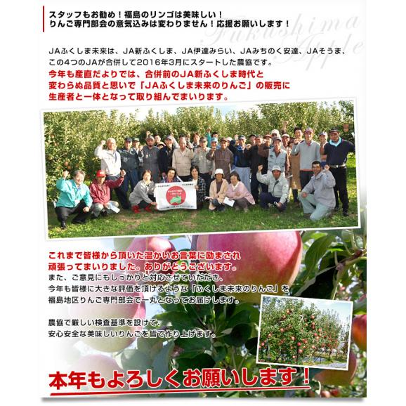 福島県より産地直送 JAふくしま未来「陽光」秀品 2.5キロ(7玉から10玉) りんご 林檎 リンゴ 送料無料04