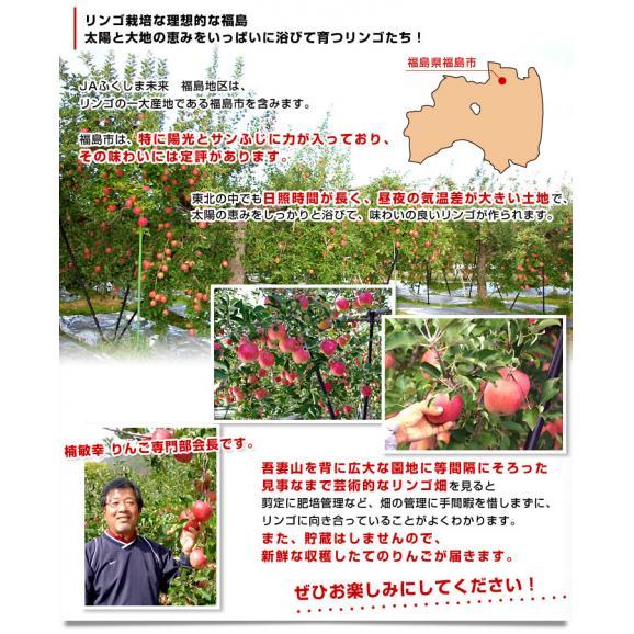 福島県より産地直送 JAふくしま未来「陽光」秀品 2.5キロ(7玉から10玉) りんご 林檎 リンゴ 送料無料05