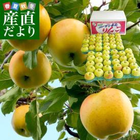 送料無料 青森県より産地直送 JAつがる弘前 「トキ」 たっぷり10キロ(小玉50玉から56玉) りんご 林檎