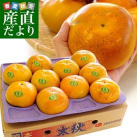 送料無料 熊本県より産地直送 JAあしきた 太秋柿 3.5キロ (8玉から14玉) 柿 かき