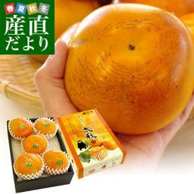 熊本県より産地直送 JAあしきた 太秋柿 2キロ(5玉から6玉) 送料無料 柿 かき