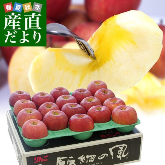 送料無料 長野県より産地直送 JAながの飯綱地区 サンふじりんご 最高等級:グルメ 5キロ (14玉から18玉) 林檎 りんご リンゴ01