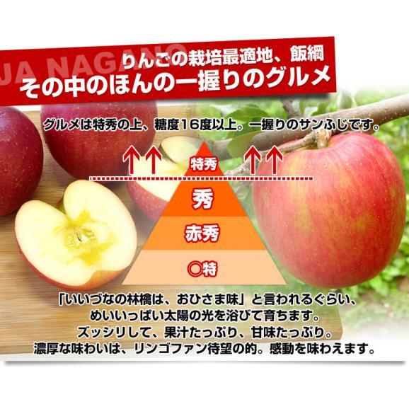 送料無料 長野県より産地直送 JAながの飯綱地区 サンふじりんご 最高等級:グルメ 5キロ (14玉から18玉) 林檎 りんご リンゴ04