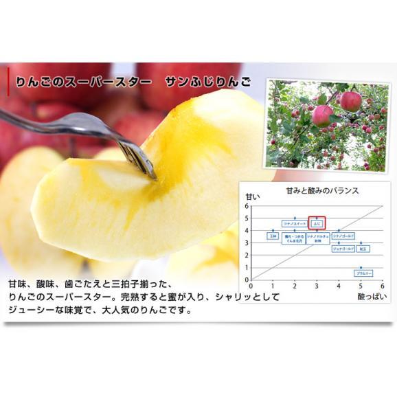 送料無料 長野県より産地直送 JAながの飯綱地区 サンふじりんご 最高等級:グルメ 5キロ (14玉から18玉) 林檎 りんご リンゴ05