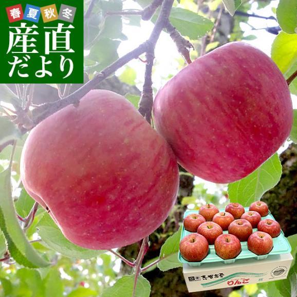 送料無料 長野県より産地直送 JAながの 志賀高原のサンふじリンゴ ご家庭用 約5キロ (12玉から14玉) 林檎 りんご リンゴ01