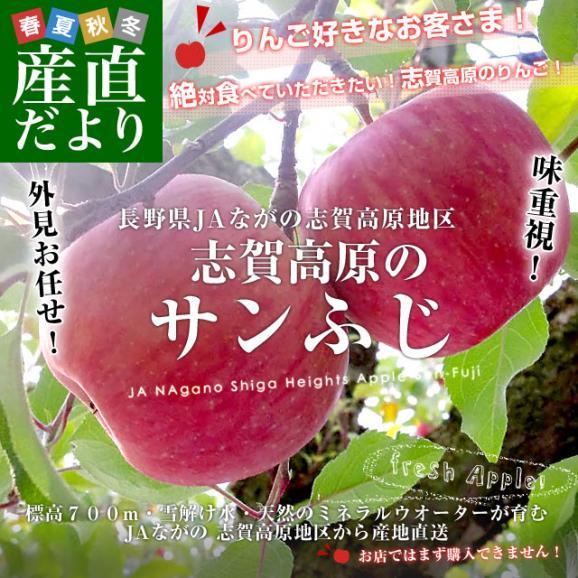 送料無料 長野県より産地直送 JAながの 志賀高原のサンふじリンゴ ご家庭用 約5キロ (12玉から14玉) 林檎 りんご リンゴ02