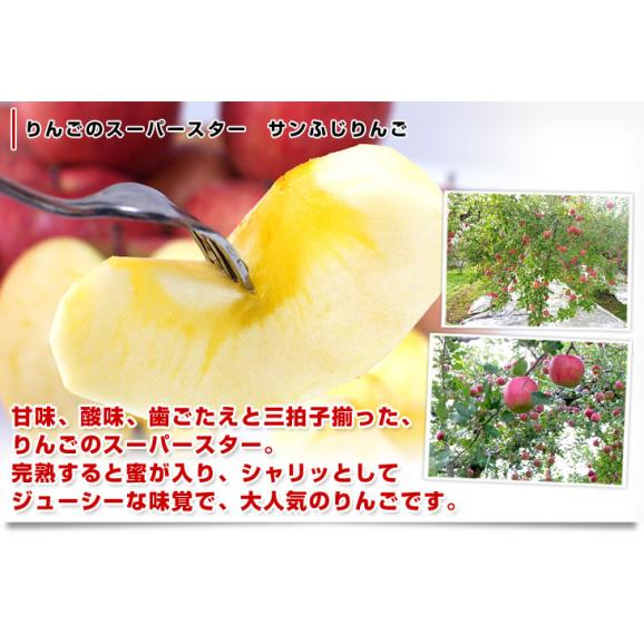 長野県より産地直送 JAながの 志賀高原のサンふじリンゴ ご家庭用 約5キロ (12玉から14玉) 送料無料 林檎 りんご リンゴ04