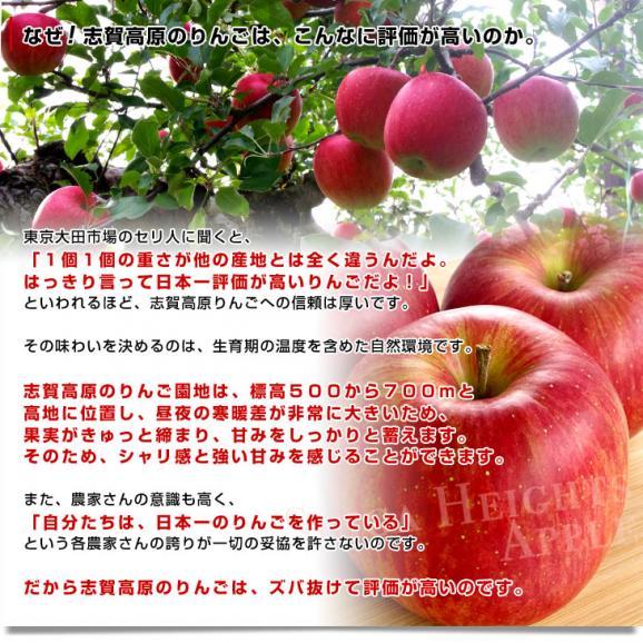 送料無料 長野県より産地直送 JAながの 志賀高原のサンふじリンゴ ご家庭用 約5キロ (12玉から14玉) 林檎 りんご リンゴ05