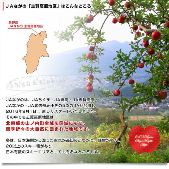送料無料 長野県より産地直送 JAながの 志賀高原のサンふじリンゴ ご家庭用 約5キロ (12玉から14玉) 林檎 りんご リンゴ06