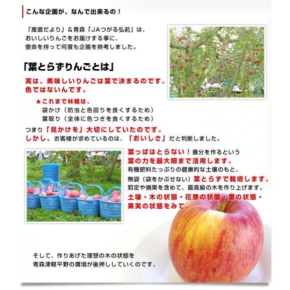 青森県より産地直送 JAつがる弘前 プレミアムサンふじ 葉型美人 (はかたびじん) 3キロ(10玉から13玉) 送料無料 林檎 りんご リンゴ04