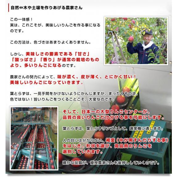 青森県より産地直送 JAつがる弘前 プレミアムサンふじ 葉型美人 (はかたびじん) 3キロ(10玉から13玉) 送料無料 林檎 りんご リンゴ05