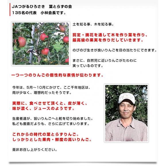 青森県より産地直送 JAつがる弘前 プレミアムサンふじ 葉型美人 (はかたびじん) 3キロ(10玉から13玉) 送料無料 林檎 りんご リンゴ06
