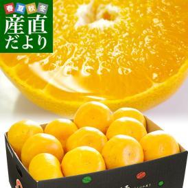 送料無料 愛媛県より産地直送 JAにしうわ せとか 訳あり Lから3Lサイズ 3キロ(10から15玉)