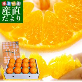 極上級の粒々感!地元でも、購入できないほど、とっても希少なオレンジ