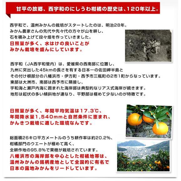 愛媛県より産地直送 JAにしうわ 甘平 (かんぺい) 秀品 3LからLサイズ 3キロ (10玉から15玉)送料無料 カンペイ 西宇和 八幡浜05
