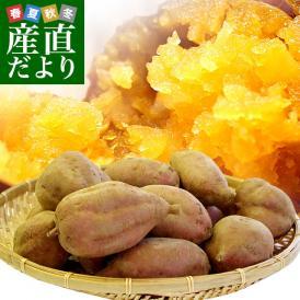 送料無料 鹿児島県より産地直送 種子島安納紅「みつ姫」 約1.8キロ さつまいも 唐芋 からいも カライモ