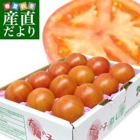 送料無料 熊本県より産地直送 JAやつしろ 太陽の子セレブ フルーツトマト 約1キロ MからSサイズ(11玉から16玉) とまと